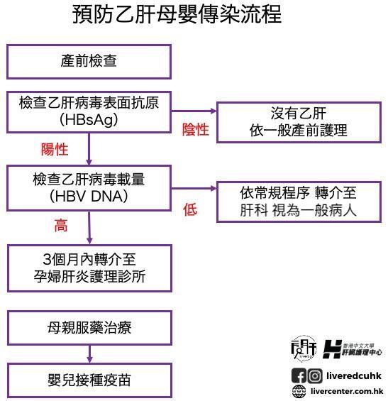 預防乙肝母嬰傳染流程